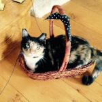 Tortie in a basket